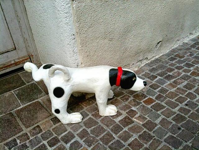 dogpee