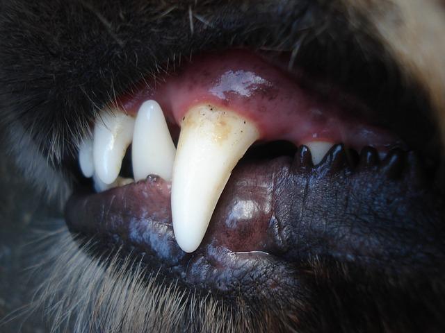 牙癢/換牙