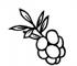cranberry_2x_adbd54af-67d0-421b-8d1b-162728bcc91e